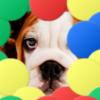لعبة البالونات و الحيوانات