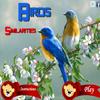 لعبة الطيور