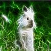 بازل صورة الأرنب