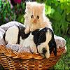بازل القط و الكلب