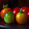 بازل صورة الطماطم الملونة