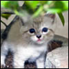 بازل القطة الصغيرة