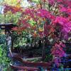 بازل شجرة الزهور