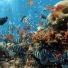 لعبة البحث عن الاشياء في الشعب المرجانية