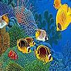 بازل صورة السمك الملون