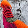 بازل صور الطيور المتحركة