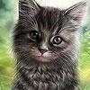 بازل صورة القطة
