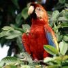 الطيور بانوراما