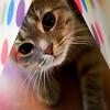 القط لطيف