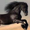 الخيول بانوراما