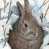 الثلوج والأرنب